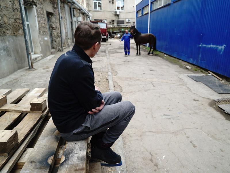 Парень в коньках смотрит на лошадь во дворе цирка
